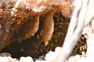 Bees and honey in the hill side